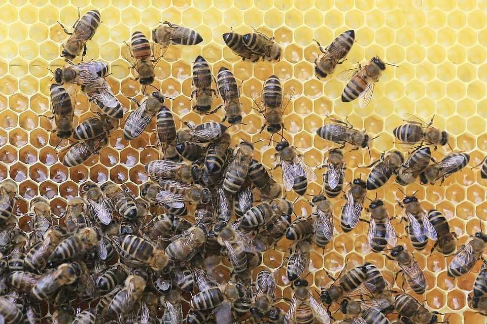 Ekibimiz arı gibi çalışıyor